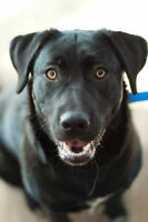 Meet Harley-Available through Liferaft Animal Rescue