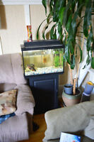 Aquarium tout inclus 20 gallons