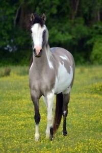 Looking for my forever horse