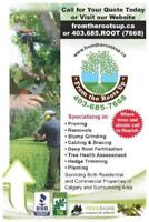 COMPLETE TREE SERVICES... TREE PLANTING, STUMP REMOVAL ETC!!!