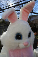 Easter Bunny for your event  or party