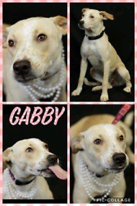 Niagara Dog Rescue - Gabby is Great With Everyone! Even Cats!