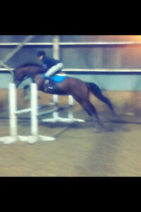 Looking for a second rider for my mare Kitchener / Waterloo Kitchener Area image 2