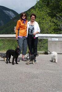 HOUSE/PET Sitting/Banff Canmore Cochrane JasperCalgary/Okotoks..