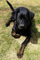 Copper is looking for his furever home-Liferaft Animal Rescue
