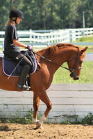 HORSES FOR LEASE IN SPRUCE GROVE AREA