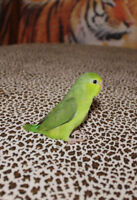 Baby Parrotlets