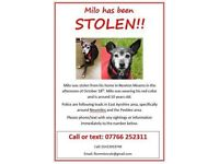 PLEASE HELP FIND MILO!