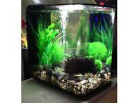 Biorb flow 30L fish tank