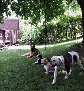 ******PET SITTING (REGISTERED VETERINARY TECHNOLOGIST)****** Kitchener / Waterloo Kitchener Area image 4