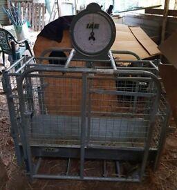 IAE Mechanical Lamb Weigher Scales 100kg