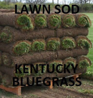 SOD INSTALLATION LAWN CARE WEED CONTROL CALL THE PROS!