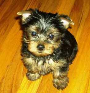 PREMIER DOG GROOMING...quiet stress-free atmosphere ...save 20%