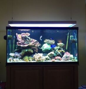 120 Gallon Aquarium with Stand and Plumbing