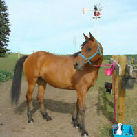 CUTE PONY FOR HALF LEASE - AMAZING BEGINNER HORSE - KID SAFE