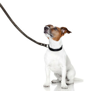 Leash Walking and Come When Called Training Workshop
