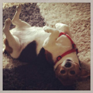 Dog Walking & Pet Sitting Services Available - KW Area