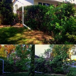 Black Out Tree Removal 226-700-1484 London Ontario image 5