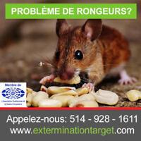 Montréal Exterminateur Extermination-Souris-Rat 514-587-6689