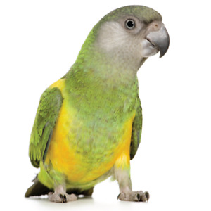 Offering a good home for parrots