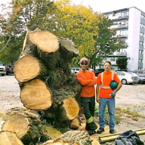 Tree removal. Free wood. Tree services.