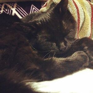 Black Female Cat missing in Ravenswood, SE of Airdrie