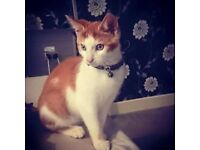stunning male kitten