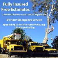 Professional tree services will beat major quotes by 10%