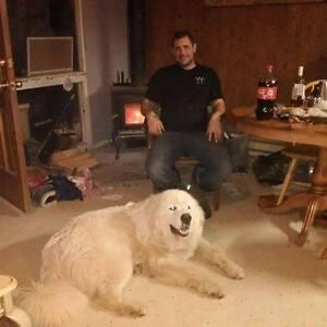 Lost dog in Deacon / Golden Lake