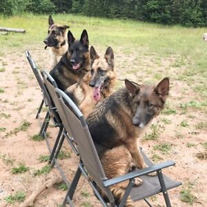 Dog Boarding Services