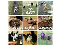Friendly and trustworthy dog walker & pet sitter in Stirling area