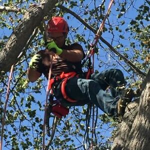 Sticks tree services/serving central Alberta