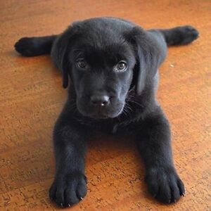 ISO a puppy for loving home