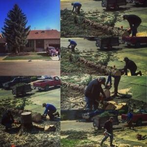 TREE CUTTING AND FALL CLEAN UP SERVICES London Ontario image 2