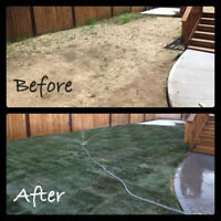 New Lawn - Low Price - New Sod