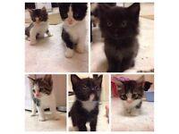 Kittens Needing Loving Homes