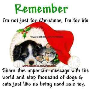 A home for Christmas  , cat's an dog's an uther pet's Edmonton Edmonton Area image 2