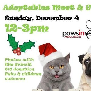 PAWS IN NEED ANIMAL RESCUE Grinch Photos & Adoptables