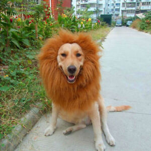 Déguisement crinière de Lion pour moyen et grand chien