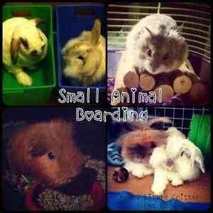 Small Animal Boarding for Rabbits, Guinea Pigs, etc.
