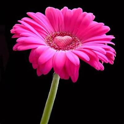 pinkpursonalities