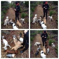 Group Dog Walks for Small Dogs Only with Red Dog Pet Services!