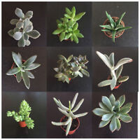 BULK SUCCULENTS & CACTUS FOR SALE