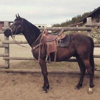 Renegade- Started Gelding for Sale