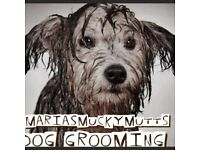 Dog Groomer. One to One grooming in stress free surroundings