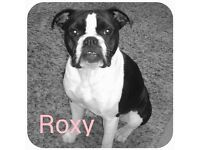 Re-Home my dog Roxy