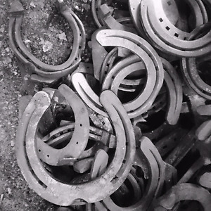 Looking for horse shoes