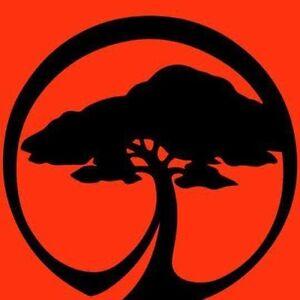 All arbor tree service Branxton Singleton Area Preview