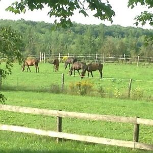 LF house horse barn and indoor arena
