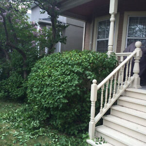AFFORDABLE TREE PRUNING AND HEDGE TRIMMING London Ontario image 1
